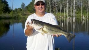 Bob-Fork bass